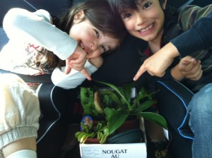 Kids and their carnivorous plants