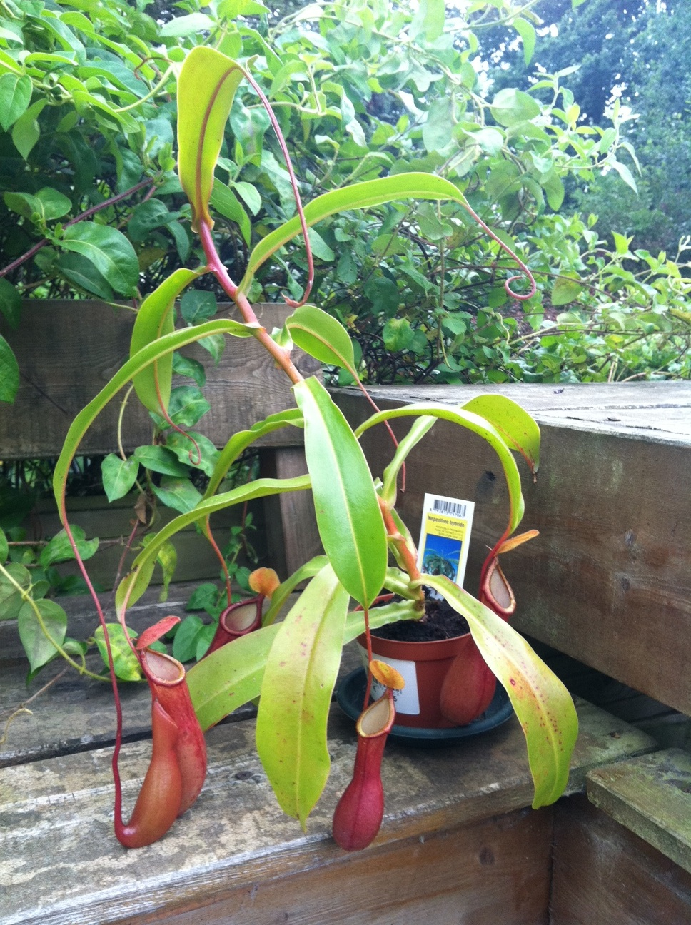 five reasons to keep carnivorous plants in the classroom