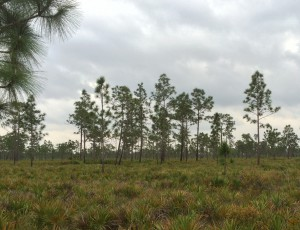 Cloudy skies in the Disney Wilderness Preserve