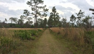 A path through the Disney Wilderness Preserve