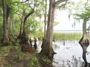 Lake Russell in the Disney Wilderness Preserve